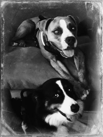 Buddy and Bella 7-1-18